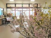 030319 桜4.JPG